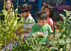 Kids looking at the plants